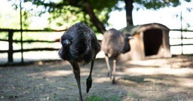 emus debrecen zoo