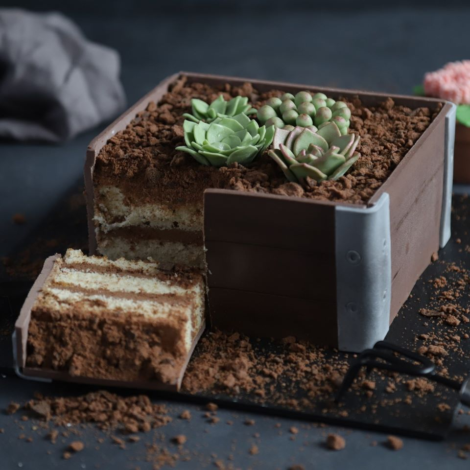 Cake to go-succulent cake-food