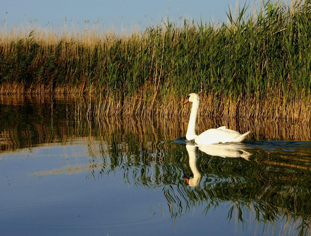 swan lake velencei