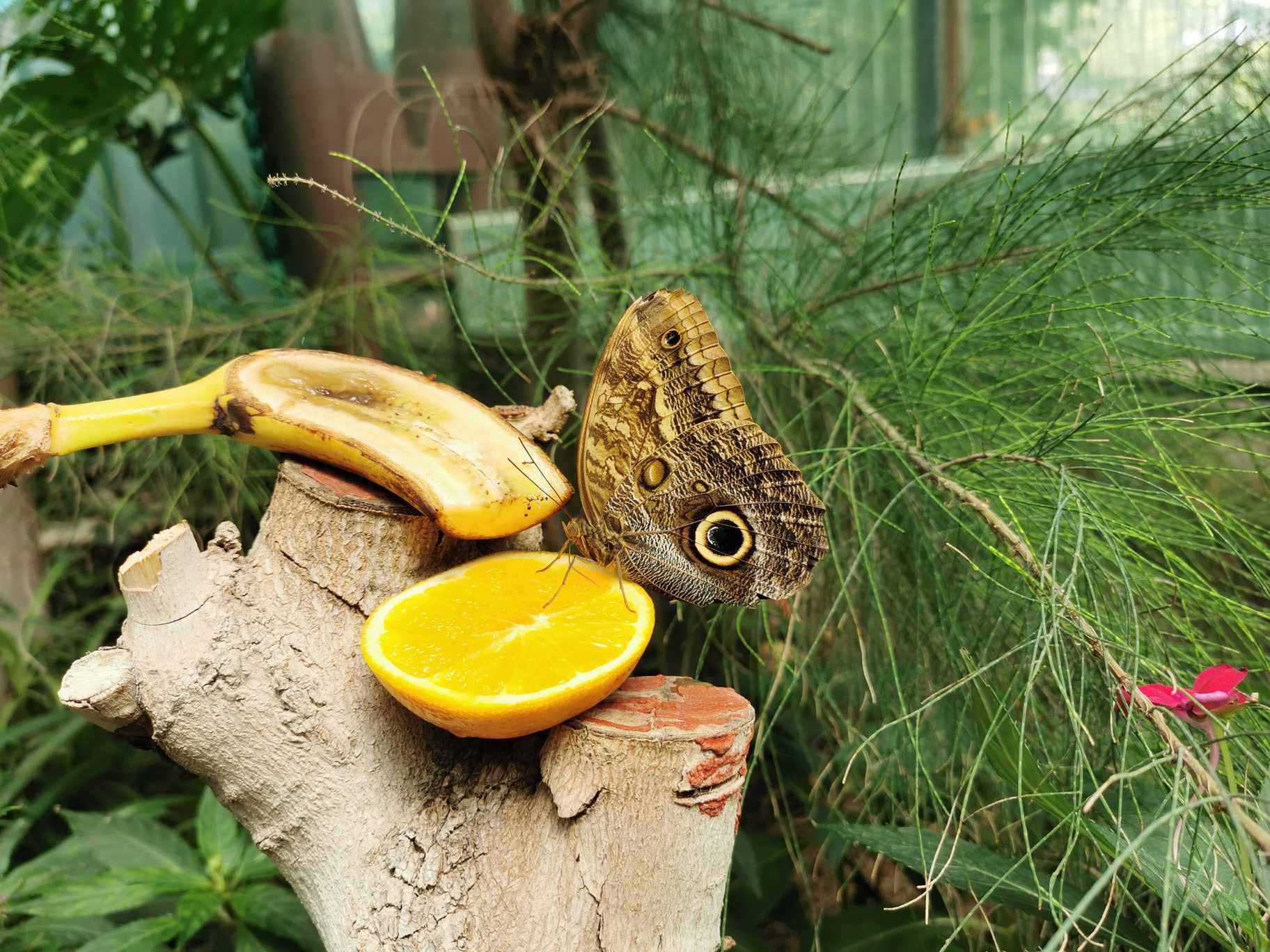 Budapest Zoo-butterfly-animal1