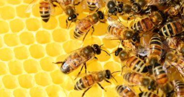 Honey Méz Bee Háziméh