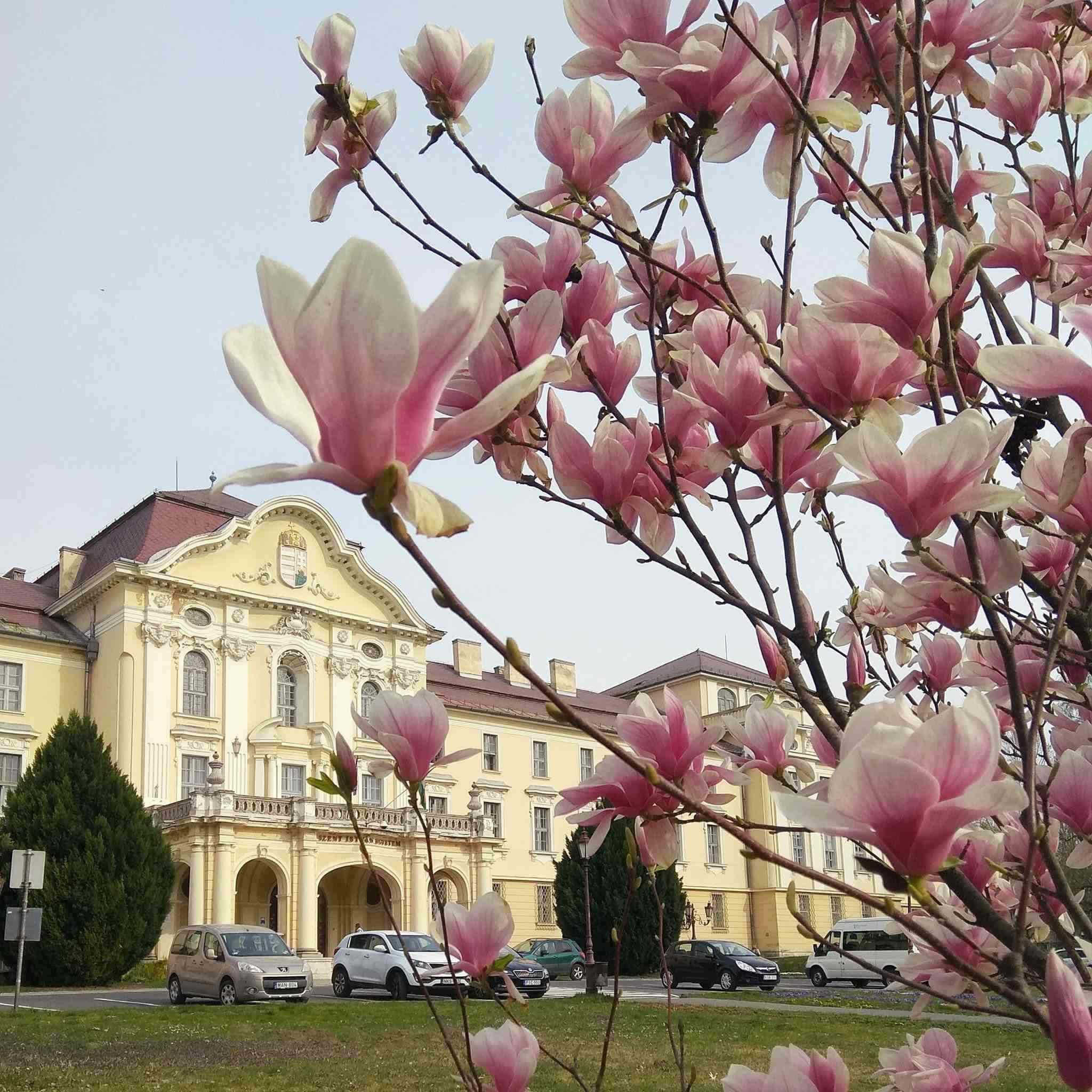 szent istván university gödöllő