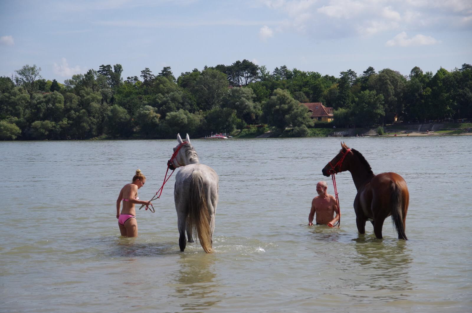 national gallop hungary danube swim