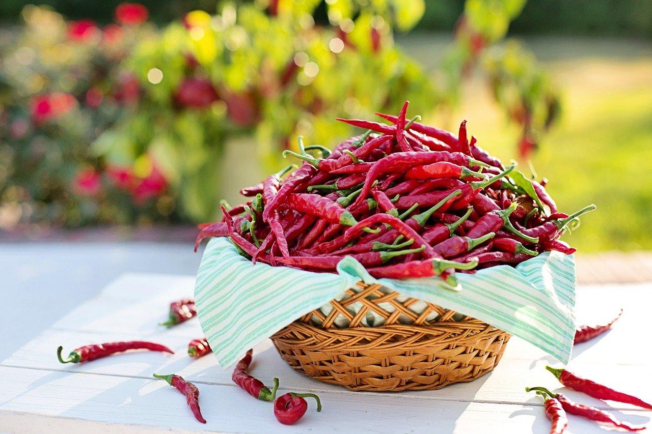 chili pepper paprika hungary hot