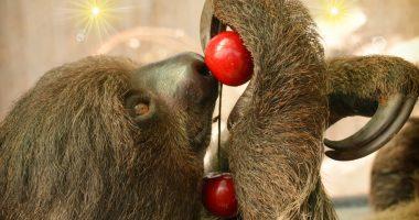 budapest zoo sloth
