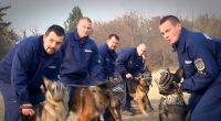 Rendőr Kutya Dog Police 2