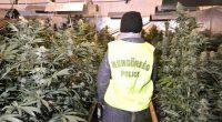 drug cannabis hungary