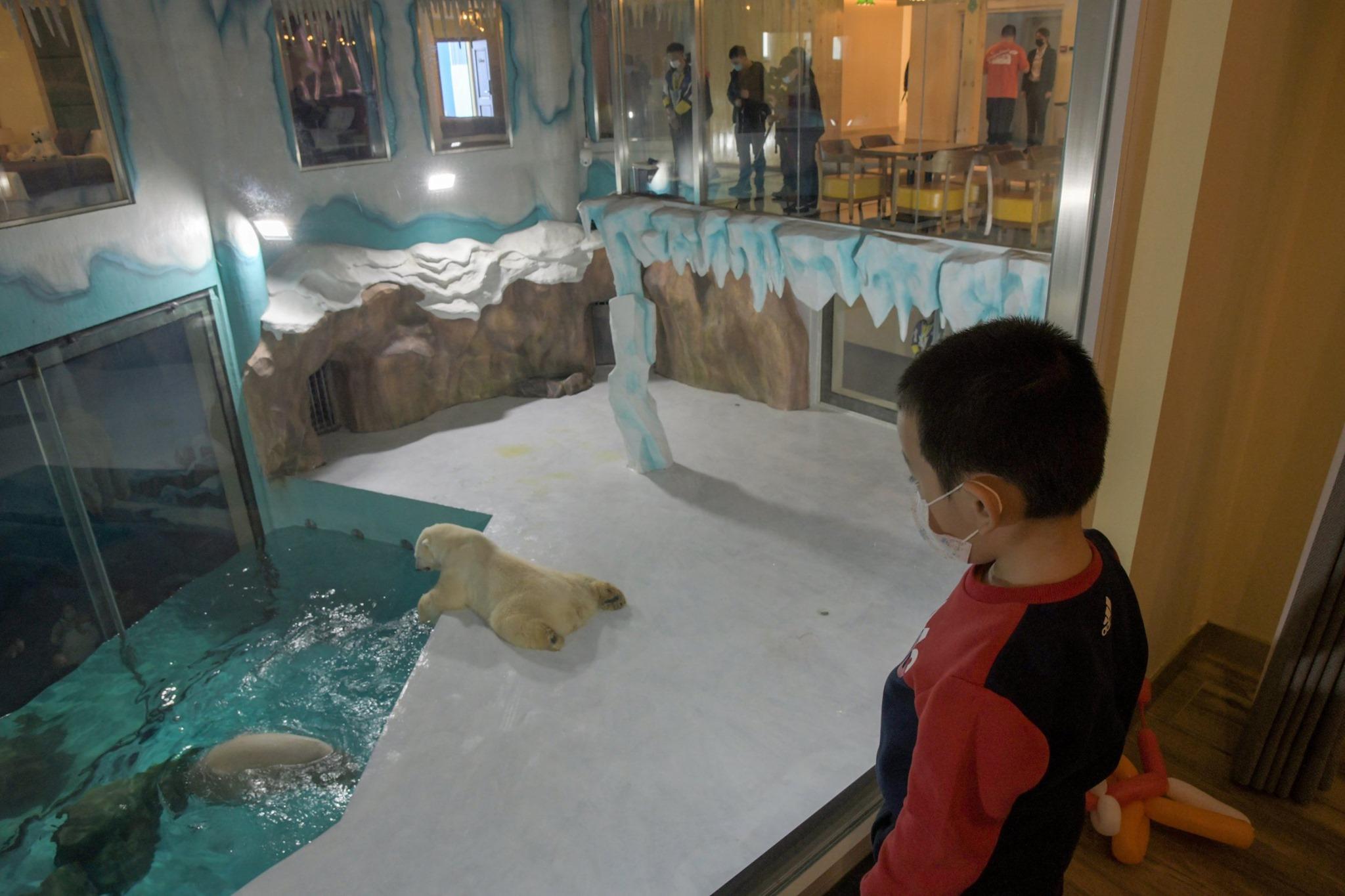 polar bear hotel