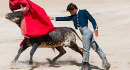Bullfight Spain Spanyolország Bikaviadal
