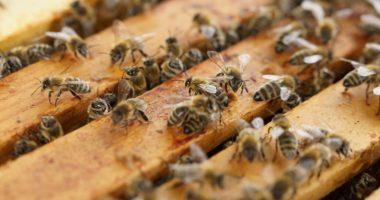 Beehive Honeycomb