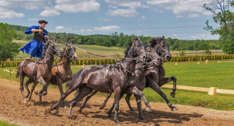 culture-horse-equestrian-history
