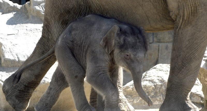 safari-elephand-nature-zoo