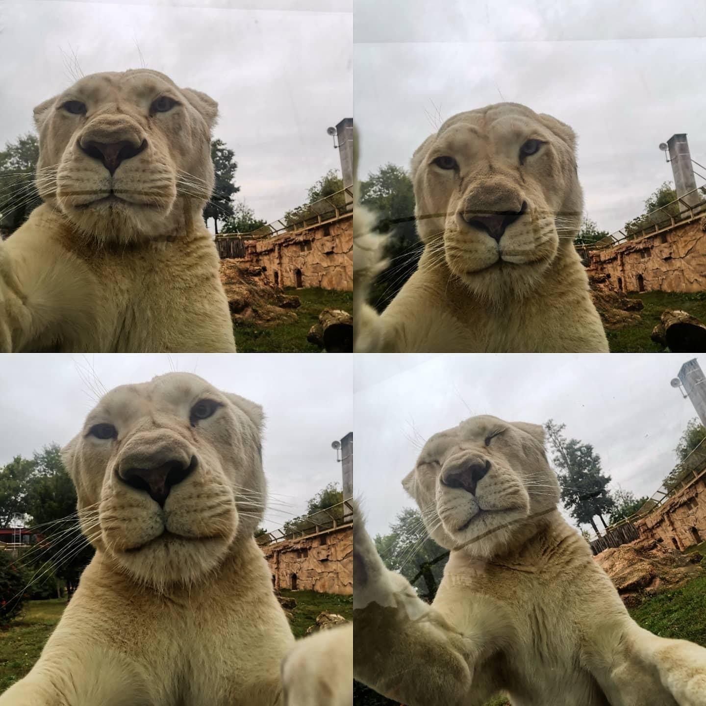 Győr Zoo