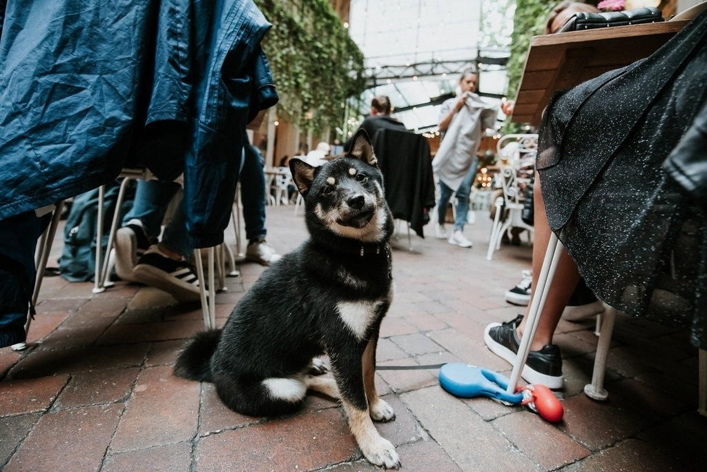Budapest dog restaurant