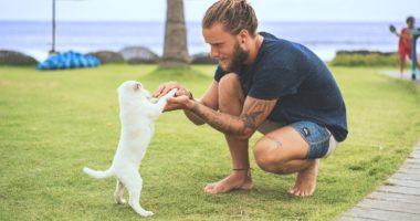dogs-puppy-dog-man-beach