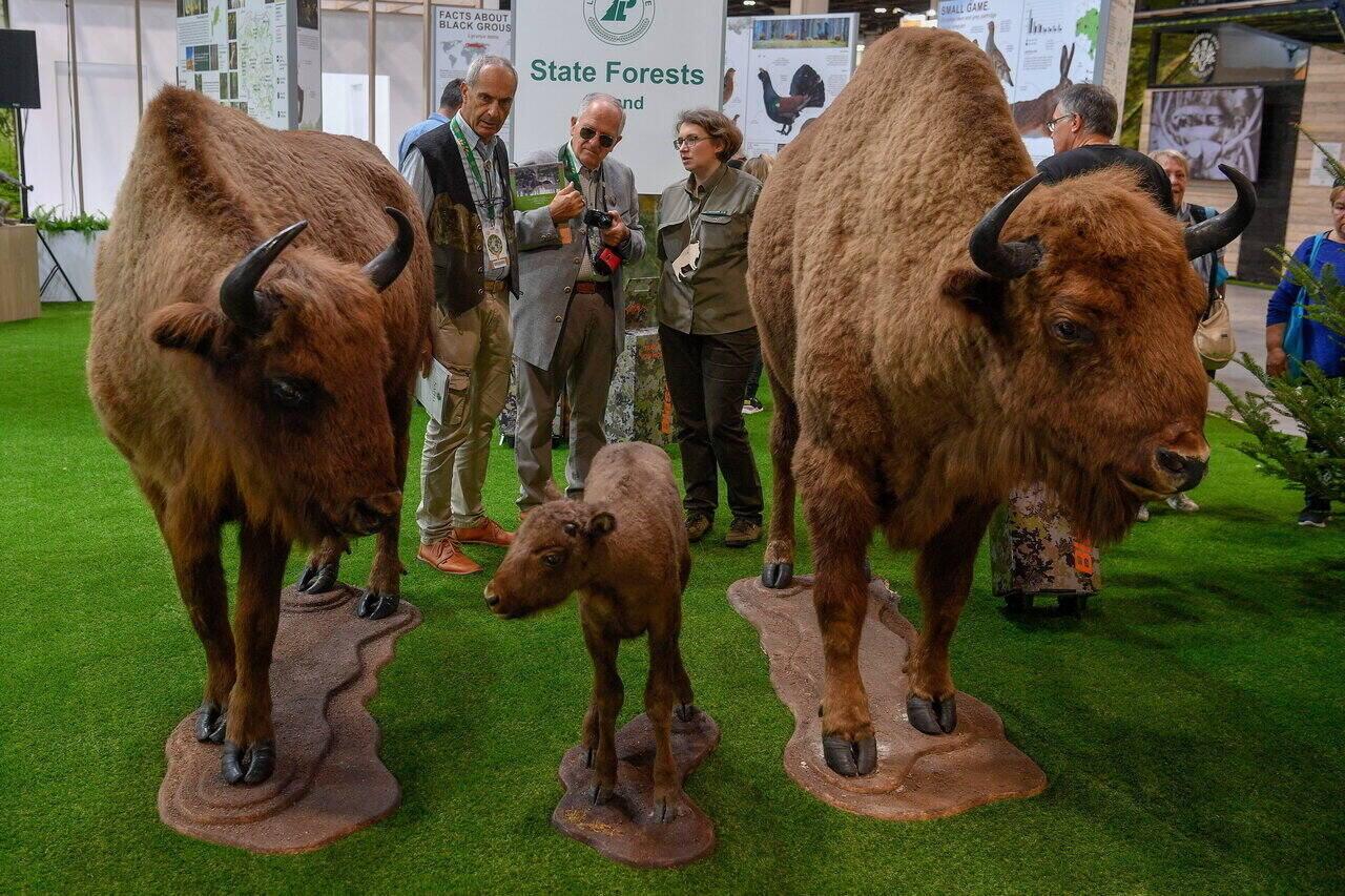 Budapest World Hunting Expo 24