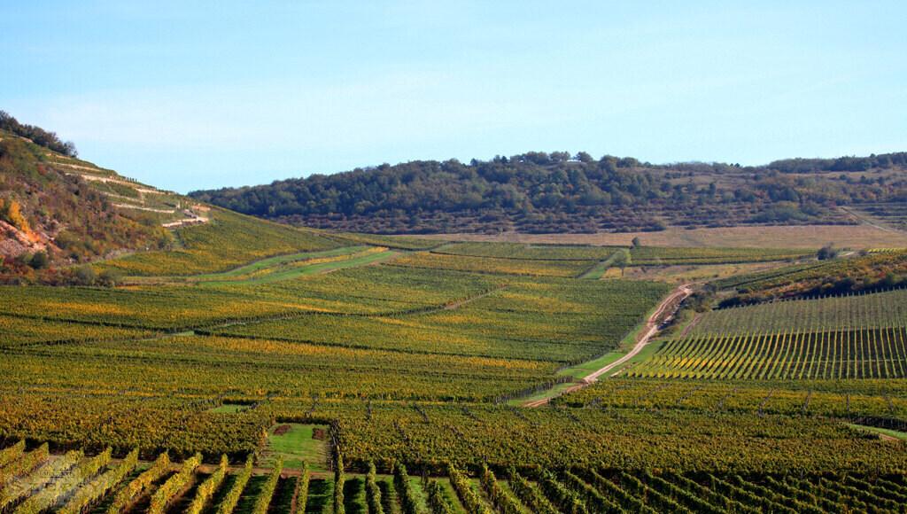 Szepsy Winery Hungary 1