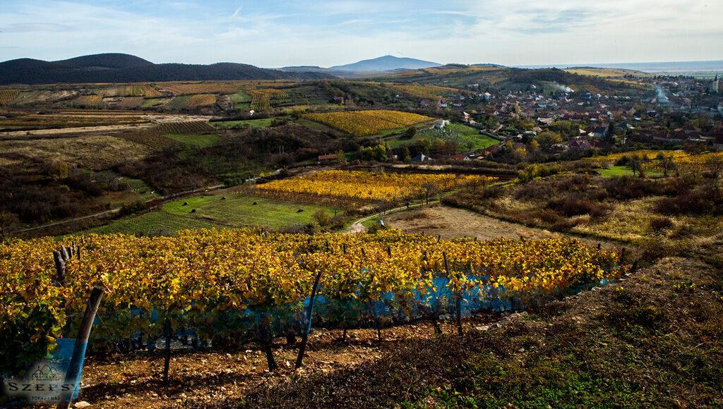Szepsy Winery Hungary 2
