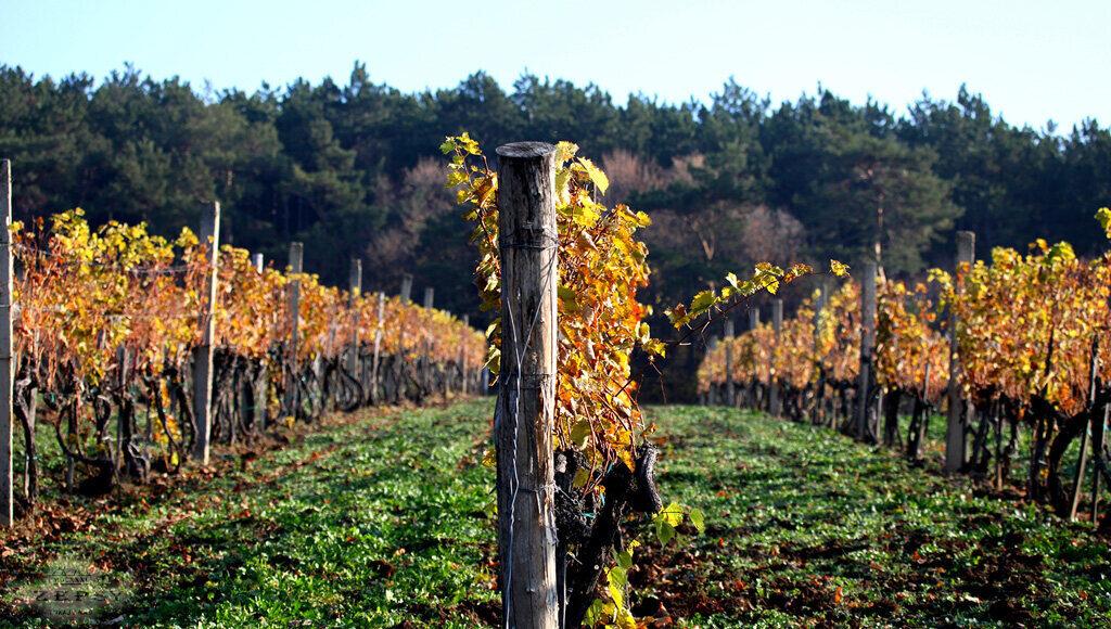 Szepsy Winery Hungary 3