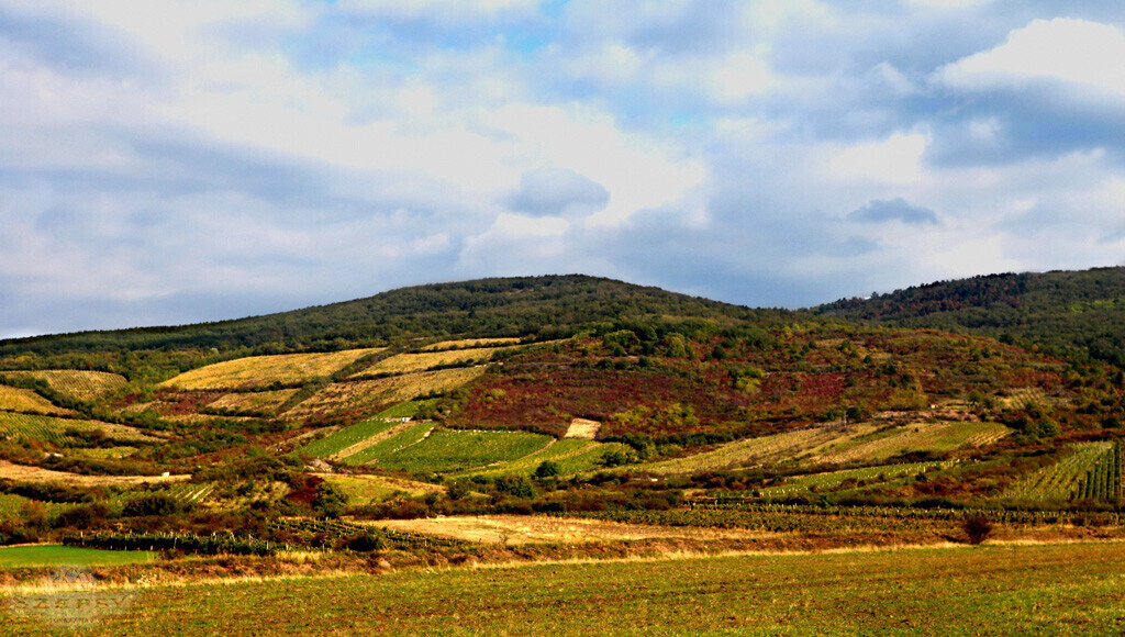 Szepsy Winery Hungary 4