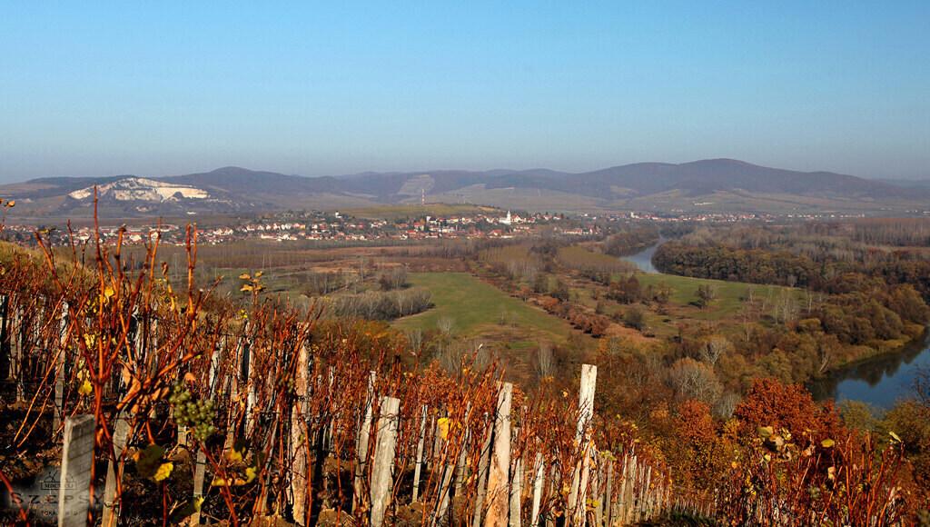 Szepsy Winery Hungary 5