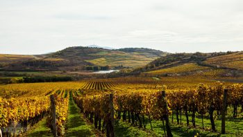 Szepsy Winery Hungary 6